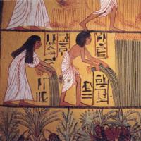 Egyptian_harvest.jpg